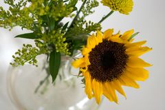 Яркий желтый солнцецвет и зеленые цвета в вазе стоковая фотография