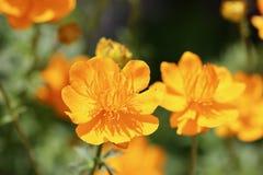 яркий желтый цвет цветков стоковые изображения