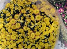 Яркий желтый букет Стоковые Фотографии RF