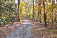 яркий желтый цвет листва падения Стоковые Фото