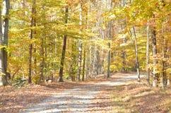 яркий желтый цвет листва падения Стоковые Изображения