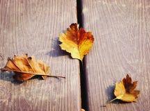 яркий желтый цвет листьев Стоковая Фотография