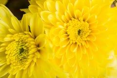 Яркий желтый цвет цветет букет стоковое фото