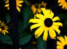 яркий желтый цвет цветка Стоковое фото RF