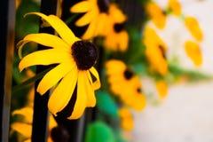 яркий желтый цвет цветка Стоковое Изображение RF