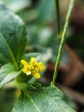 яркий желтый цвет цветков Стоковые Изображения RF
