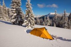 Яркий желтый шатер на высокогорном луге среди покрытых снег елей Стоковое Фото