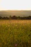 Яркий заход солнца неба в портрете поля Стоковое Изображение