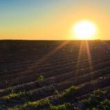 яркий зеленый цвет поля над заходом солнца Стоковая Фотография
