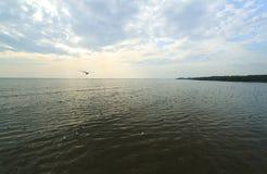 Яркий и заход солнца с группой в составе белая чайка Стоковые Фото