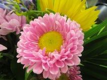 Яркий и привлекательный розов-желтый покрашенный цветок букета Стоковое фото RF