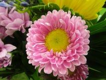 Яркий и привлекательный розов-желтый покрашенный цветок букета Стоковое Изображение