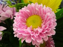 Яркий и привлекательный розов-желтый покрашенный цветок букета Стоковые Фотографии RF