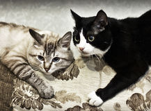 Яркий и Черно-друз! Стоковая Фотография RF
