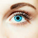 Яркий конец голубого глаза вверх стоковые изображения