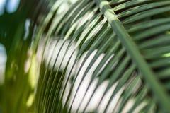 Яркий конец лист ладони вверх Стоковое Фото