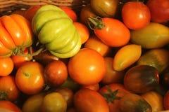 Яркий красочный конец-вверх томатов лежа в корзине после сбора Стоковые Изображения