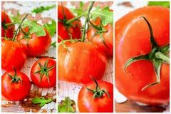 Яркий красочный коллаж красных зрелых очень вкусных органических томатов, томатов установил, здоровая концепция еды, противостари Стоковые Изображения