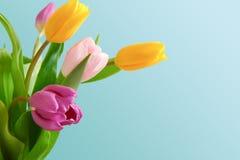 Яркий крупный план букета тюльпанов на голубой предпосылке Стоковые Фото