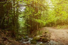 Яркий ландшафт леса Свет утра падает на путь леса стоковые фотографии rf