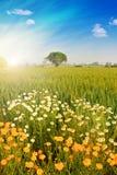 Яркий ландшафт Стоковое Фото