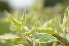 Яркий, листья зеленого цвета стоковое фото