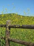 Яркий мирный ландшафт весны с деревенской деревянной загородкой и свежим зеленым полем заполнил с желтыми wildflowers Стоковое фото RF