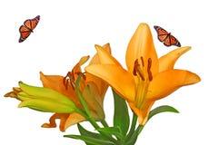 яркий монарх цветков бабочки Стоковые Фото