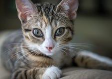 Яркий наблюданный котенок Стоковые Изображения