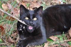 Яркий наблюданный черный котенок Стоковые Изображения
