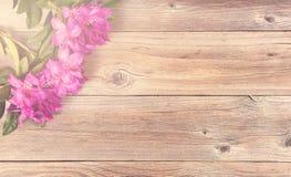 Яркий дневной свет понижаясь на цветки рододендрона Стоковые Изображения