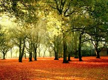 яркий парк цветов Стоковые Фотографии RF