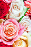 Яркий пестротканый букет роз Естественное backgroun цветков Стоковое Фото