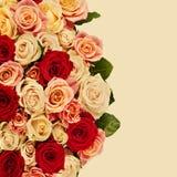 Яркий пестротканый букет роз Естественное backgroun цветков Стоковые Изображения RF