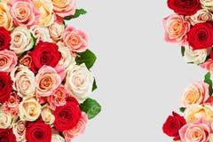 Яркий пестротканый букет роз Естественное backgroun цветков Стоковое Изображение