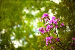 яркий пинк цветков Стоковое Изображение RF