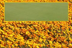 Яркий питомник цветков с, который граничат открытым шаблоном зоны текстового поля Стоковая Фотография