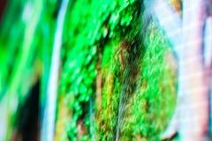 Яркий покрашенный экран smd СИД зеленого цвета Стоковая Фотография