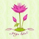 Яркий розовый цветок лотоса с бутонами Стоковые Фотографии RF