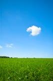 яркий свежий зеленый цвет травы Стоковая Фотография RF