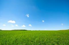 яркий свежий зеленый цвет травы Стоковые Фотографии RF