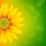 яркий солнцецвет бесплатная иллюстрация