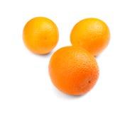 Яркий состав апельсинов, изолированный на белой предпосылке Тропические и экзотические плодоовощи цитрусовые фрукты зрелые витами Стоковая Фотография