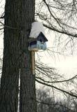 Яркий фидер птицы на дереве Стоковое Фото