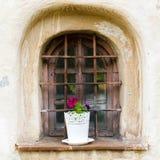 Яркий цветок на окне Стоковые Изображения