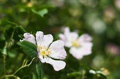 Яркий цветок среди зеленых листьев Стоковое фото RF
