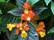 яркий цветок Стоковое Изображение