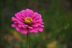 яркий цветок Стоковое Изображение RF