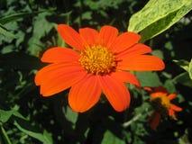яркий цветок Стоковые Изображения