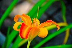яркий цветок Стоковые Фотографии RF